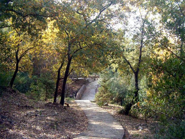 El Jardín Botánico El Castillejo se encuentra en la localidad de El Bosque (Cádiz)