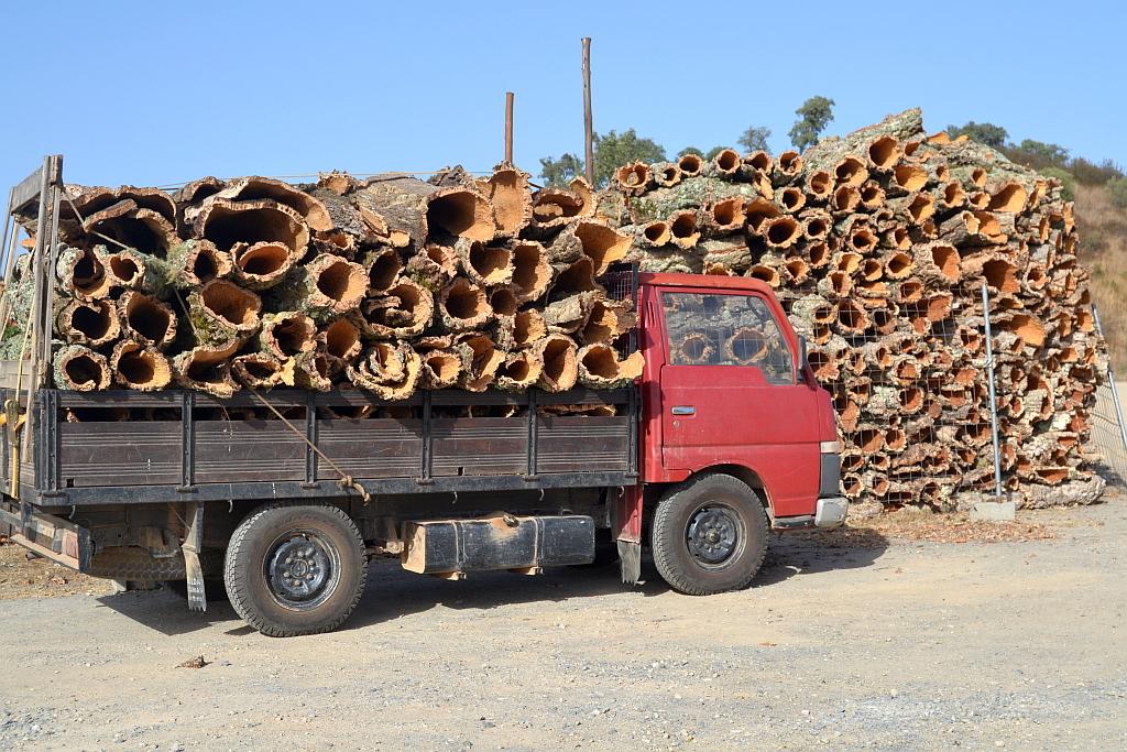 El corcho - Quercus suber (alcornoque mediterráneo) es un tipo de árbol de hoja perenne, endémico del Mediterráneo.