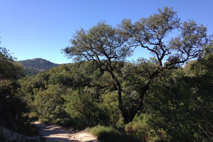 Sendero Tesorillo - Llanos del Campo - una de las áreas recreativas más amplias del parque de la Sierra de Grazalema