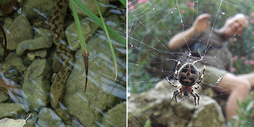 Left: A Viperine snake underwater. Right: A spider's web blocked our path.