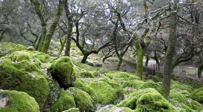 Llanos del campo en la Sierra de Grazalema